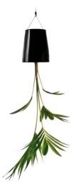 skyplant-klein