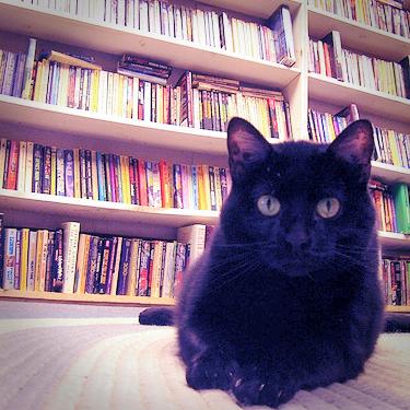 Buchhandel: Stationär wächst, online schrumpft, Paywall boomt