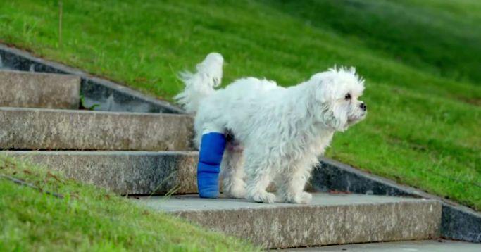 Netzfund: Hunde gehen immer, nicht wahr, Amazon?
