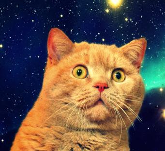 Cat Content Onlinemarketing
