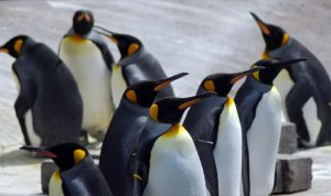 Google Penguin Update – Echtzeiteffekte für Seitenbetreiber
