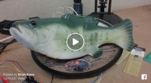 Amazon Echo als Fisch. Ist das die Lösung?