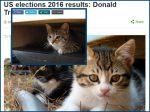 Netzfund: Niedliche Katzen statt Trump Gesichter im Webbrowser