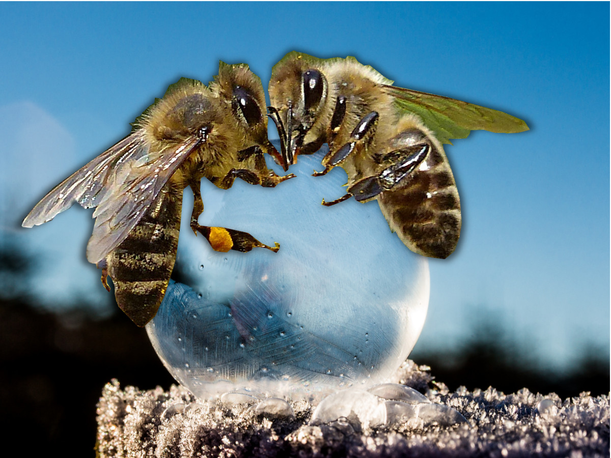 bees in ice