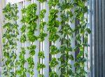 Netzfund: Vertical Farming – Salat von der Stange?