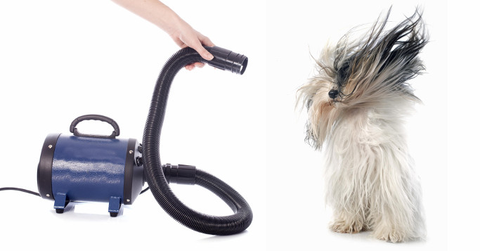dog with vacuum cleaner
