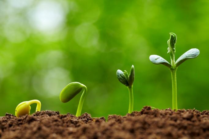 pflanzen, Erde, Wachstum, nachhaltig