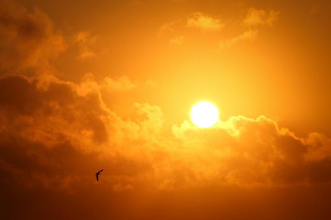 sonne, dammerung, wolken, vogel