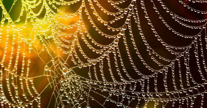 Marken als Netzwerker auf Service Plattformen Spinnennetz
