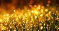 Daten – digitales Gold im Überfluss [Netzfund]