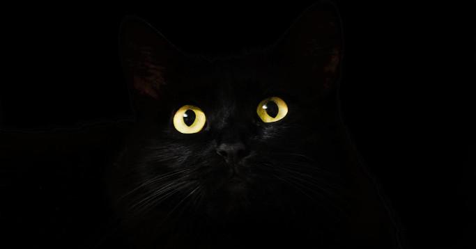 Dark Mode Schwarzsehen Trend Katzenaugen
