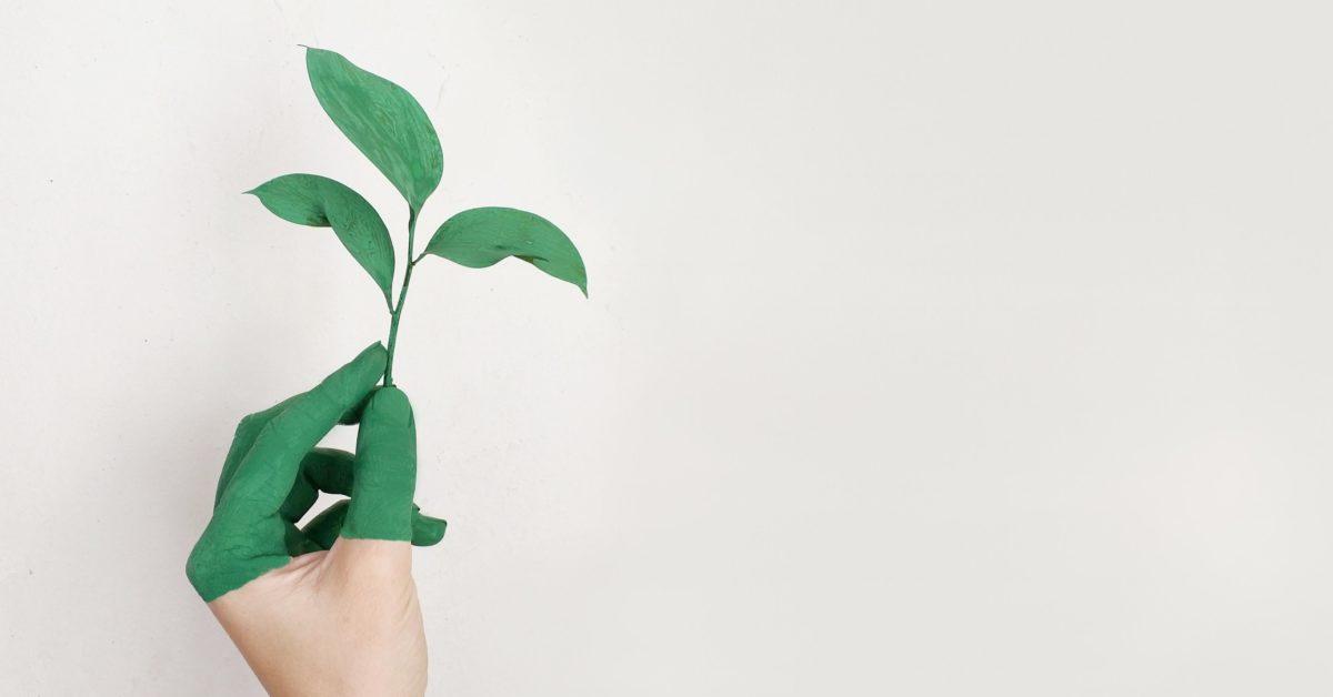 Nachhaltigkeit als Business-Strategie [5 Lesetipps]