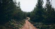 ASMR Auszeit für's Homeoffice: Mit tree.fm den Waldspaziergang nach Hause holen [Netzfund]